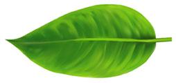 Leaf spacer